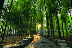 Bamboo and sunset Royalty Free Stock Images