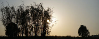 Bamboo and sunset Royalty Free Stock Photos