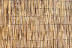 Bamboo Surface Texture Royalty Free Stock Image
