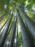 Bamboo. Taken in the Tokyo area of Japan Stock Photo