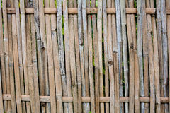 Bamboo texture Stock Photography