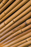 Bamboo texture. Abstract background of bamboo stalks stock image