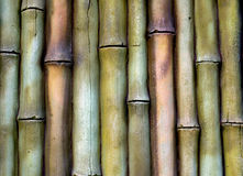 Bamboo texture background. Royalty Free Stock Image