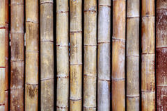 Bamboo texture. Background from old bamboo sticks, wood texture Stock Images