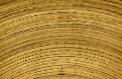 Bamboo texture. Bamboo brown texture as background stock photography