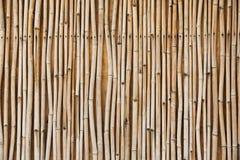 Bamboo texture Stock Photo