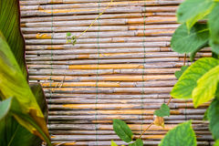 Bamboo texture with green leaves Stock Photos