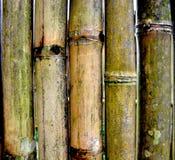 Bamboo texture. Wall green bamboo texture ,background Stock Photos