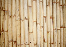 Bamboo texture. Bamboo wall in Thailand architecture Royalty Free Stock Images