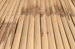 Bamboo textured Stock Images