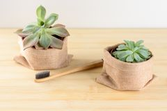 Bamboo toothbrushand succulent plant. royalty free stock images
