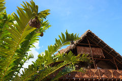 Bamboo traditional African house and green palm trees under the Royalty Free Stock Photo