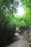 Bamboo trail. In Hong Kong Royalty Free Stock Photo