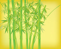 Bamboo tree. In a paper background to fill your illustration Royalty Free Stock Photography