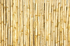 Bamboo tree background Stock Images
