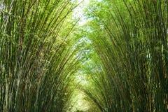 Bamboo tree. The Bamboo tree in the garden Stock Photo