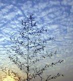 Bamboo Tree and Beautiful Sky Stock Photography