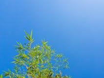 Bamboo tree on blue sky. Royalty Free Stock Photography