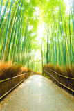 Bamboo Tree Forest Sun Light Beams Empty Road Royalty Free Stock Photos