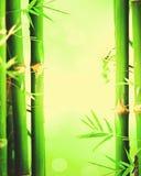 Bamboo tree green spring background. Bamboo tree with green spring background Royalty Free Stock Photo