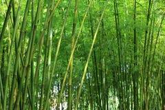 Bamboo tree Stock Photos