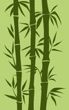 Bamboo tree illustration Stock Images