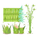 Bamboo Tree Isolate Collection Set Vector Royalty Free Stock Photography