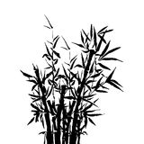 Bamboo tree japanese plant or tree. Traditional sumi painting vector illustration. Stock Photo