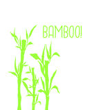 Bamboo tree japanese plant or tree. Traditional sumi painting vector illustration. Royalty Free Stock Image