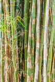 Bamboo tree and leaf. Stock Photo