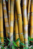 Bamboo tree and leaves Royalty Free Stock Photos