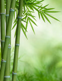 Bamboo tree with leaves. Bunch of bamboo with leaves with copy space Royalty Free Stock Photography
