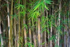 Bamboo tree photo taken in Jakarta Indonesia Stock Photos