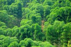 Bamboo Tree Sea Royalty Free Stock Photo