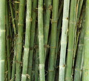 Bamboo tree texture background Royalty Free Stock Images