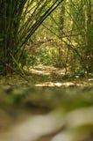 ฺBamboo Tree in the tropical garden ,Texture of green leaves. Bamboo Tree in the tropical garden ,Texture of green leaves, leaf in tropical Forest Royalty Free Stock Photo