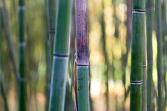 Bamboo tree trunk Stock Photos