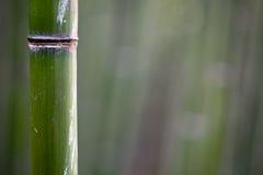 Bamboo tree trunks Stock Photo