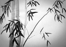 Bamboo tree. On a white background Royalty Free Stock Photo