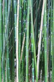 Bamboo tree wood background Royalty Free Stock Photos