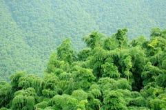 Free Bamboo Trees Royalty Free Stock Photo - 47301785