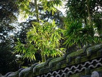 Bamboo trees with ancient stone fence Stock Photo