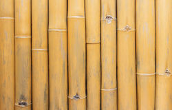 Bamboo trees for background. Brown bamboo trees for background Royalty Free Stock Photo