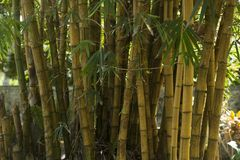 Bamboo, Trees, Blur Royalty Free Stock Photos