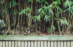 Bamboo trees and fence Stock Image