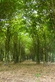 Bamboo trees growing Stock Photo