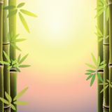 Bamboo trees and leaves at sunset time. Royalty Free Stock Photography