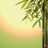 Bamboo trees and leaves at sunset time Stock Photo