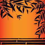 Bamboo trees and leaves at sunset time. Stock Images