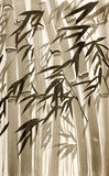 Bamboo trees and leaves Royalty Free Stock Photos